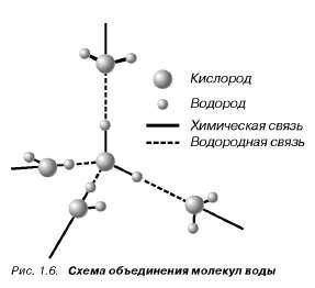 Рис. 1. Молекулы воды прочно связаны друг с другом и образуют устойчивую молекулярную конструкцию, которая...